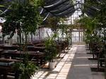 温室内バーベキューハウス